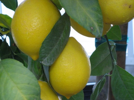 tips to avoid getting a web host lemon