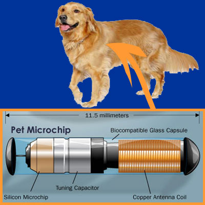 Littleton, CO Pet Microchipping